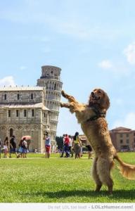 Toren van Pisa 8